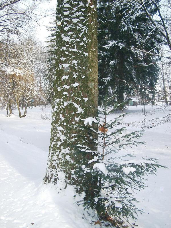 Winter Schwabmünchen